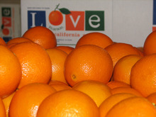 fresh navel valencia orange