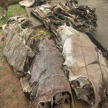 Supplier of Wet and Dry Donkey hides , Cow, goat, sheep, Horse Hides for sale