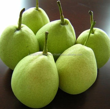 Delicious Fresh Pear Fruits With Competitive Prices