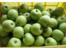 High Quality Fresh Golden Delicious Apples