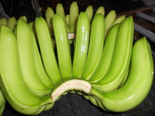Quality Fresh Cavendish Banana