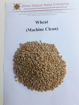 Good Quality Health Beneficial Cost Effective 100% Natural Indian Wheat