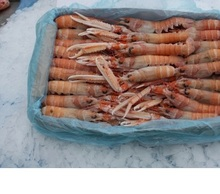 best quality frozen prawns for sale at very good price