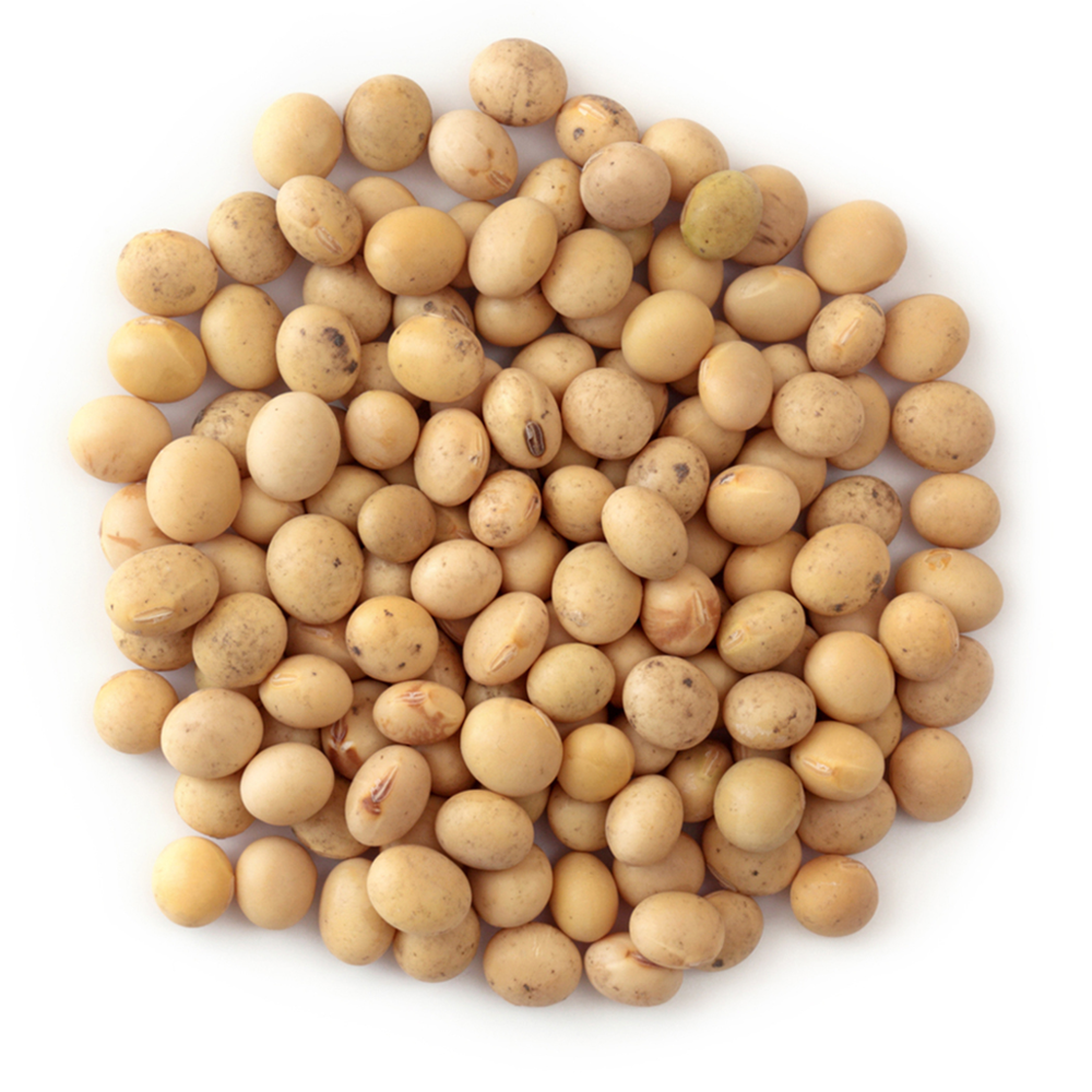 Soyabean Seeds, Soybeans for sale
