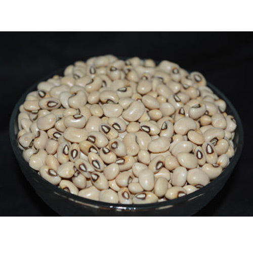 Organic Black Eyed White large black kidney beans/small black kidney beans/long shape black kidney beans/black eye kidney bean