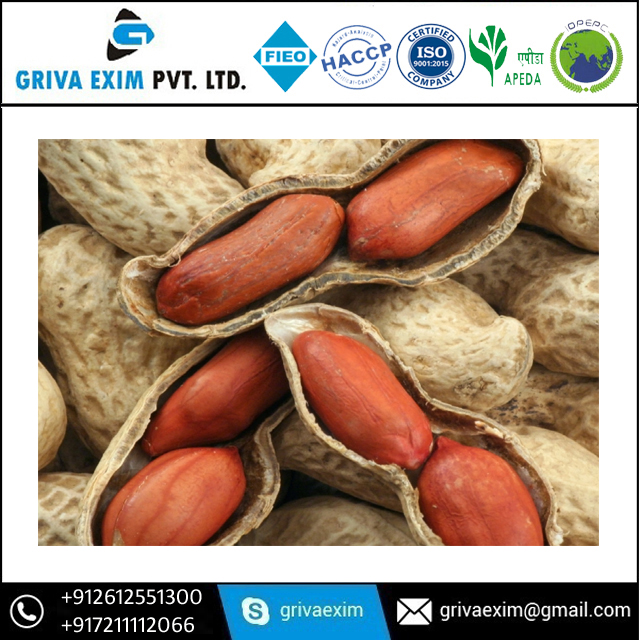 Peanut Export In UK Ukraine USA Vietnam Yemen