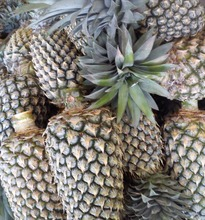 FRESH TROPICAL PINEAPPLE FROM SRI LANKA