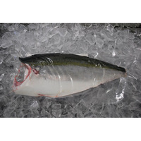High Quality Sea Fish Amakusa Yellowtail
