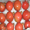 Fresh Pomegranate Fruit Supplier in India / Malaysia / Singapore / Dubai / Maldives / Sri Lanka