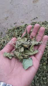 quality supplier Gymnema sylvestre