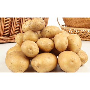 cheap potatoes bulk export with high quality