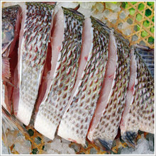Fresh Frozen Bonito fish, sardine, tuna, mackerel, Eel, ribbon, squid, salmon