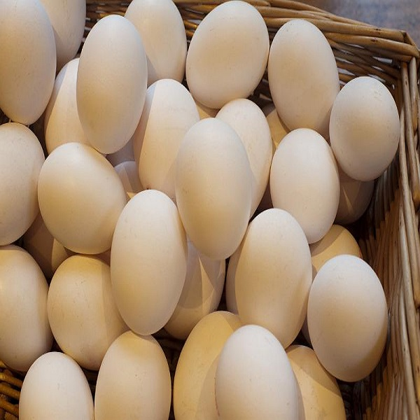 Farm Fresh Chicken Table Eggs at whole sales prices