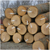 Oak Logs, WHITE AND RED OAK WOOD LOGS FOR SALE