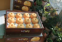 wholesale korean fresh Singo Pear sweet juicy high quality pear for whole sale