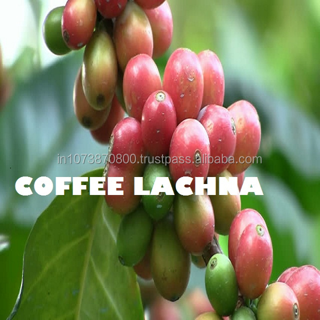 Yummy Taste 50 KG and 60 KG Bag Indian Origin Ground arabica coffee beans specifications