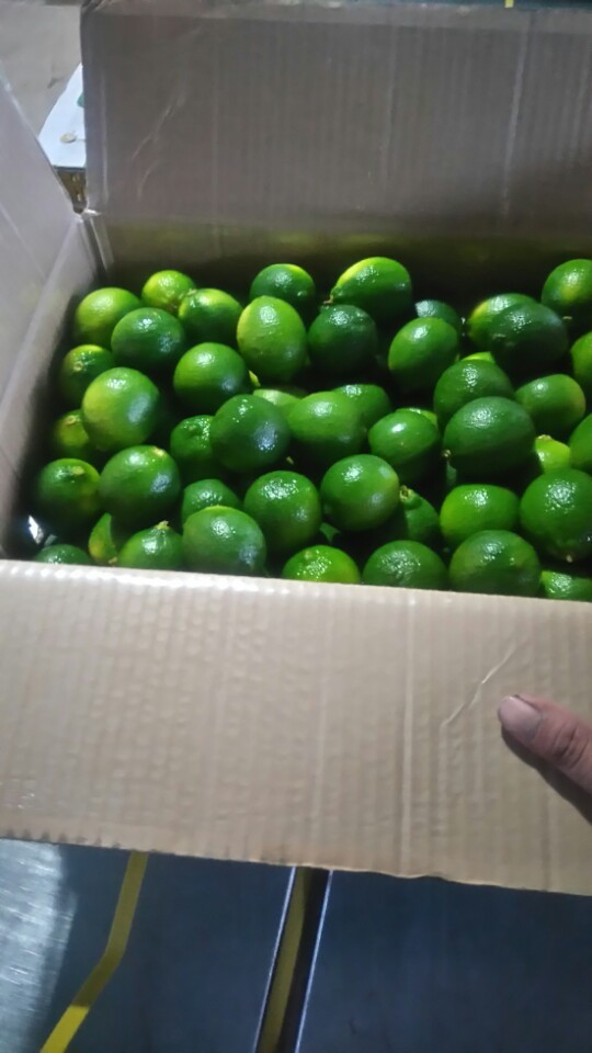 Green Lemon and Fresh lime in Vietnam