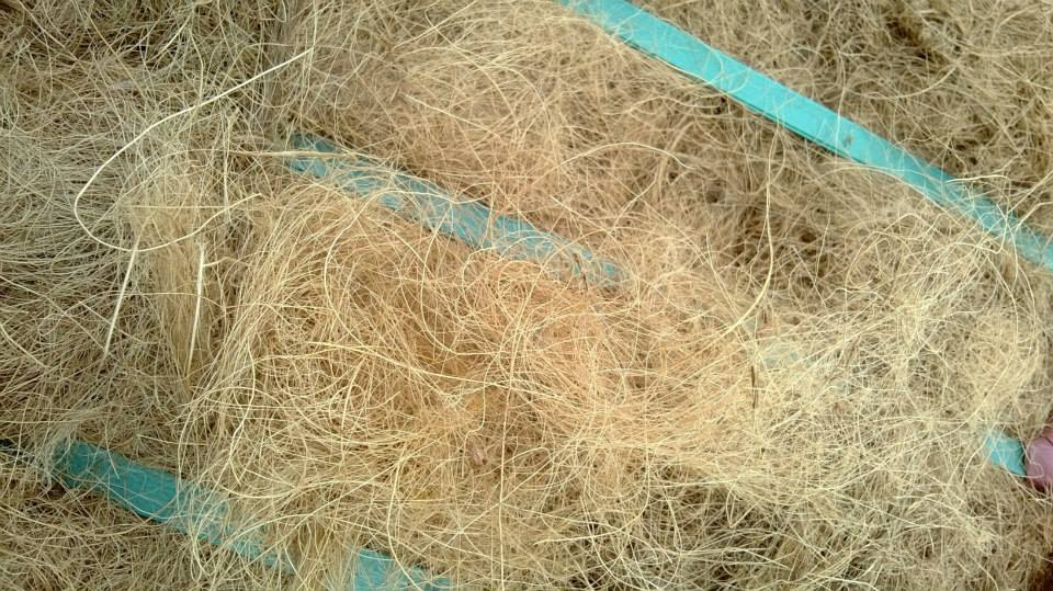 TOP Quality and hot sale Vietnam Coconut fiber. WP/ Line. Mobi 0084 907 886 929. E: swan120488 at gmail.com