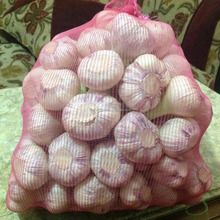 Liliaceous Vegetables Product Type and Fresh Style bulk garlic for export