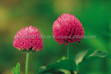 Natural Red Clover