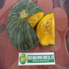 RESONABLE PRICE- BEST QUALITY OF FRESH PUMPKIN!