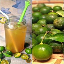 Calamansi juice, delicious and good for health, best price now