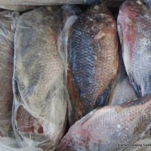 Frozen Black Tilapia Fish From Wholesale Product