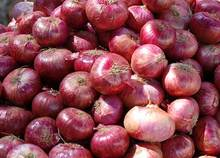 Fresh Red Chinese Onions