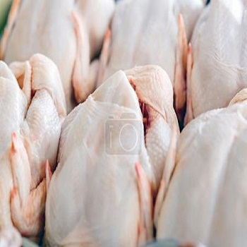 Halal Frozen Processed Whole Chicken Suppliers