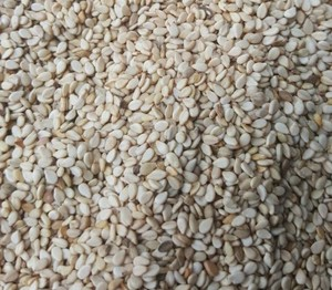 High Quality Whitish Sesame Seeds