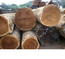 Walnut Wood Logs /Black Walnuts Wood Logs / Timber for sale