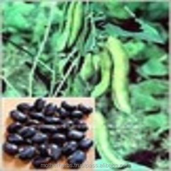 Suppliers of Mucuna Pruriens Seeds
