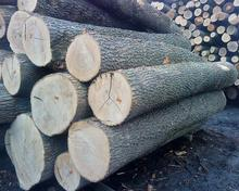 Ash logs Available in All Seizes from France