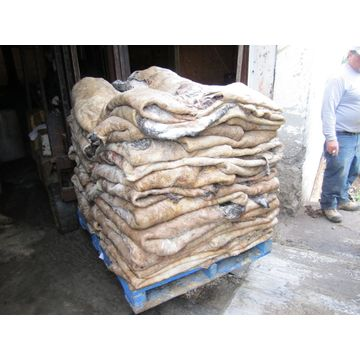 Good Quality 100% DRY SALTED DONKEY HIDES / WET SALTED DONKEY HIDES Competitive Price
