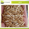 Best Quality Oats Wholesale Price Bulk Supplier and Exporter