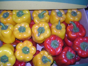 fresh capsicum for sale