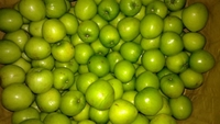 Wholesale Royal Gala Apples From Turkey