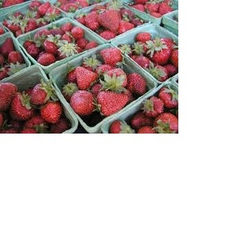 fruits iqf fresh strawberry