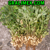 New Product For Animal Feed - Peanut Tree Leaf