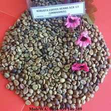 UNWASHED ROBUSTA COFFEE BEANS SCR 13 - HIGH QUALITY - GOOD PRICE - hoang@vilaconic.vn