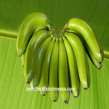 Cheap and good Cavendish Banana with best quality from Vietnam