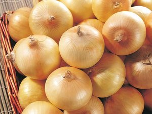 Fresh Onion/Yellow Onion/Red Onion For Sale
