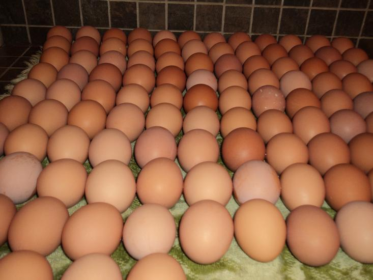 Fresh Chicken Table Eggs Brown