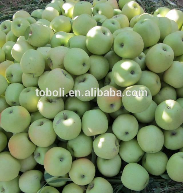 new crops golden apple fruit price