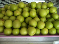 quality Fresh fruits red and green Fuji apples available