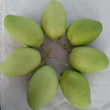 VietNam fresh mango fruit with the best quality and good price
