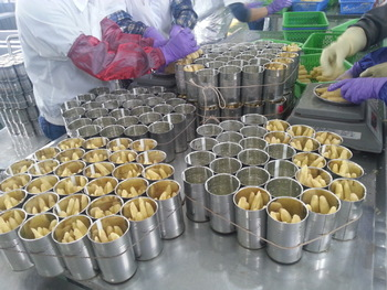 Canned Pickled Baby Corn in brine Vietnam