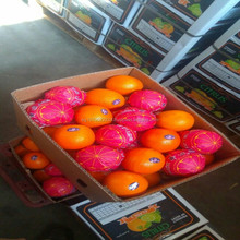 fresh fruits Wholesale Best Price Fresh Citrus Fruit valencia Orange