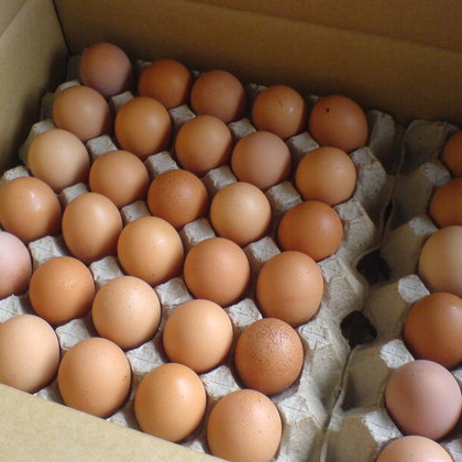Chicken Eggs at CHEAP PRICE