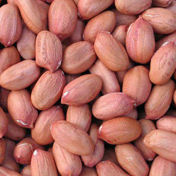 wholesale best quality Peanuts kernel for sale at good price